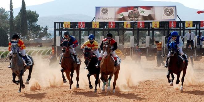 مهرجان تراثي للخيول العربية الأصيلة قريباً
